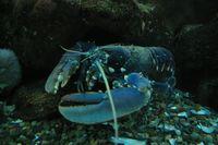casier de pêche a homard